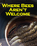 Unwanted Bees