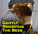 Removing Bees